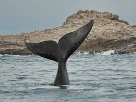 Whale Watching Port Elizabeth