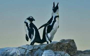 Whale Watching Penguins Port Elizabeth